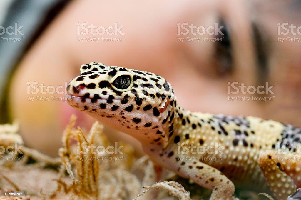 Leopard Gecko royalty-free stock photo