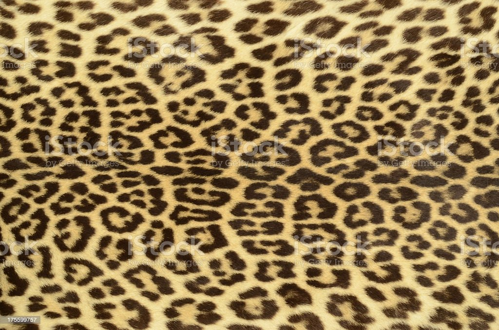 Leopard Hide stock photo