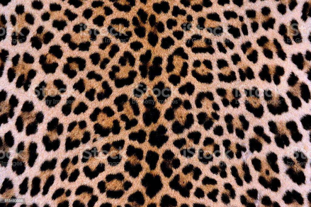 Leopard skin - authentic stock photo