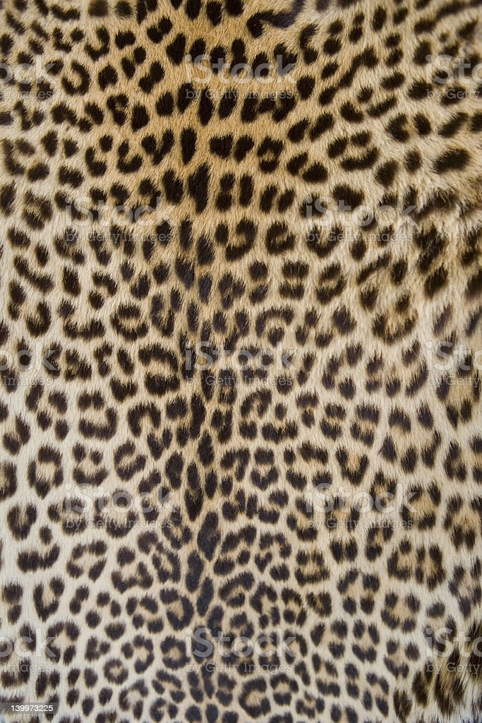 leopard skin stock photo