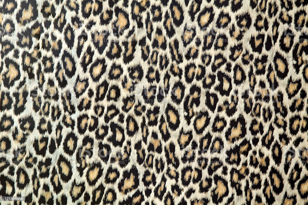Leopard skin texture or fabric stock photo