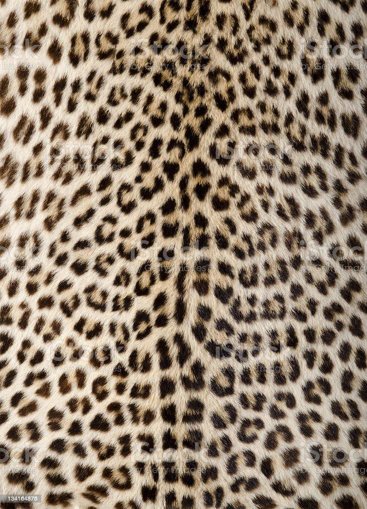 Leopard Skin/Hide royalty-free stock photo