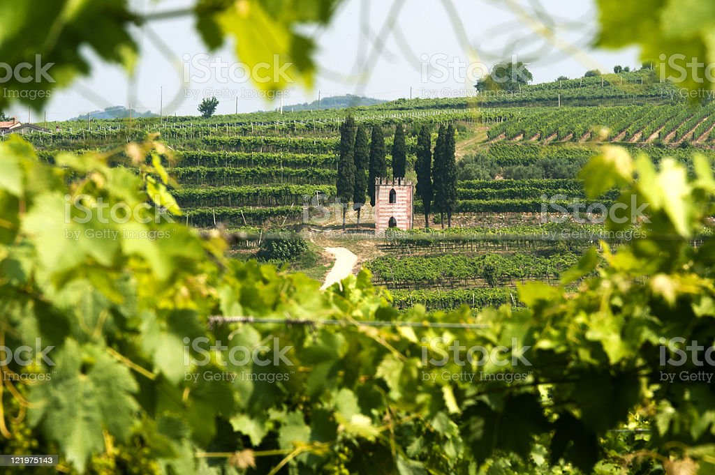 Lessinia (Verona, Veneto, italy), vineyards near Soave at summer stock photo