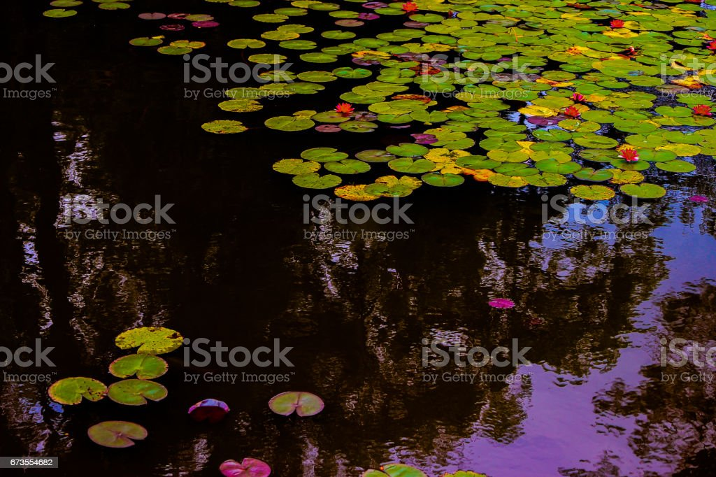 Let lotus of heart to bloom stock photo