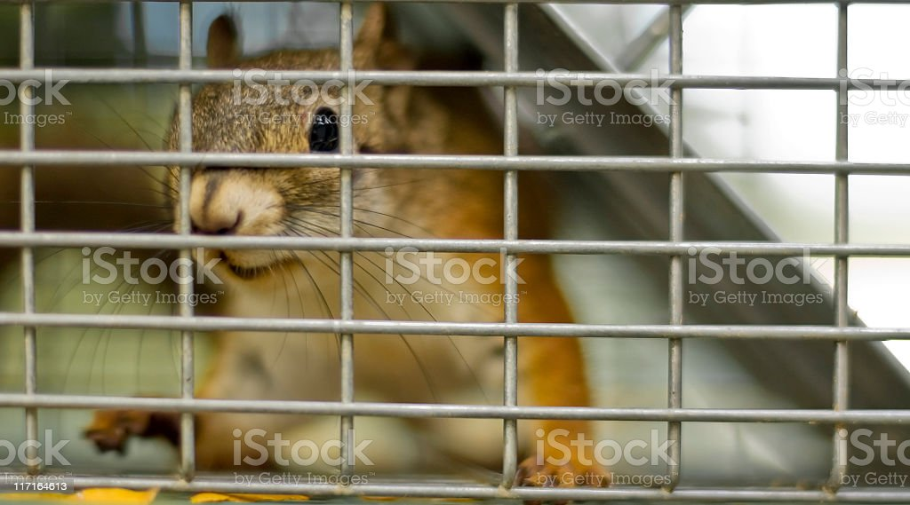 Let Me Out! stock photo