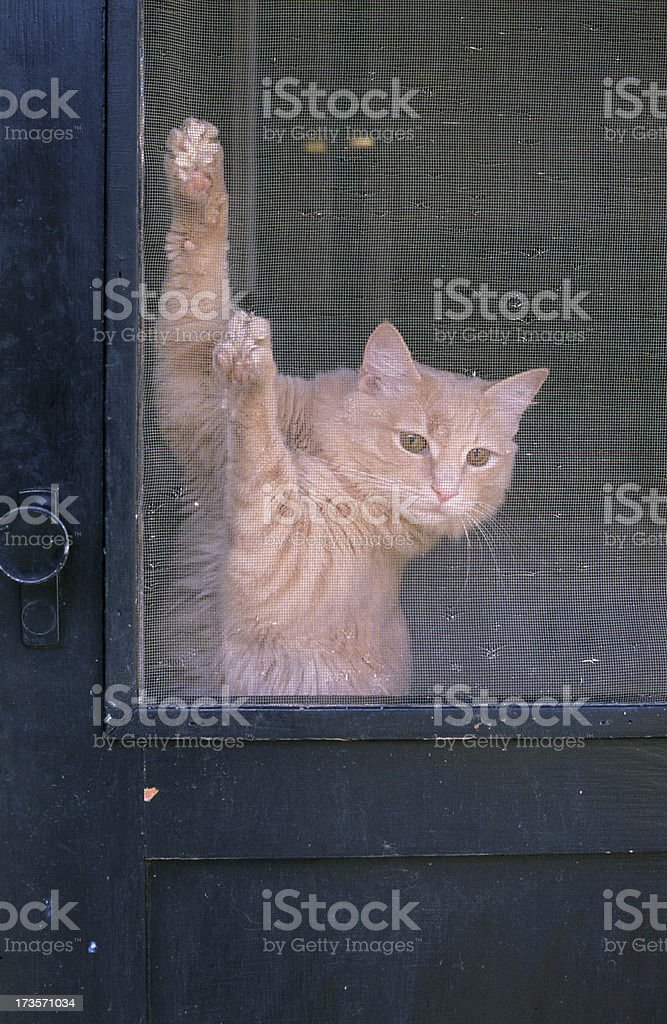 Let Me Out stock photo