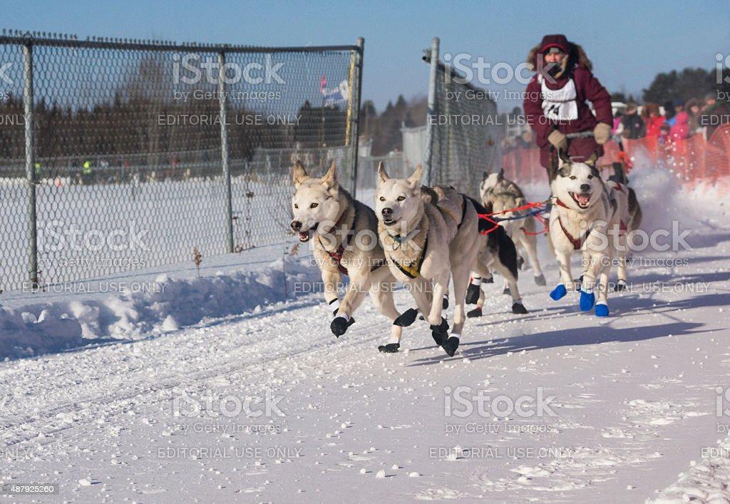 Let the dog sledding race begin stock photo