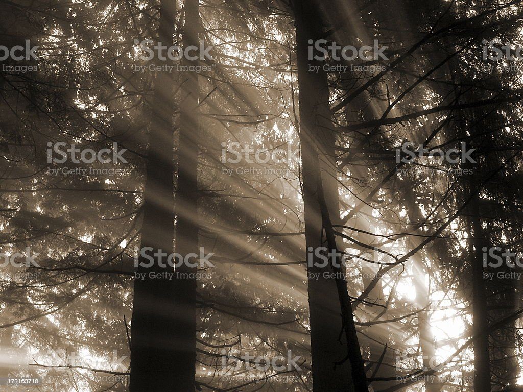 Let The Sun Shine In royalty-free stock photo