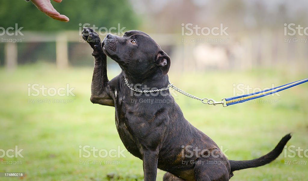 lets be friends stock photo