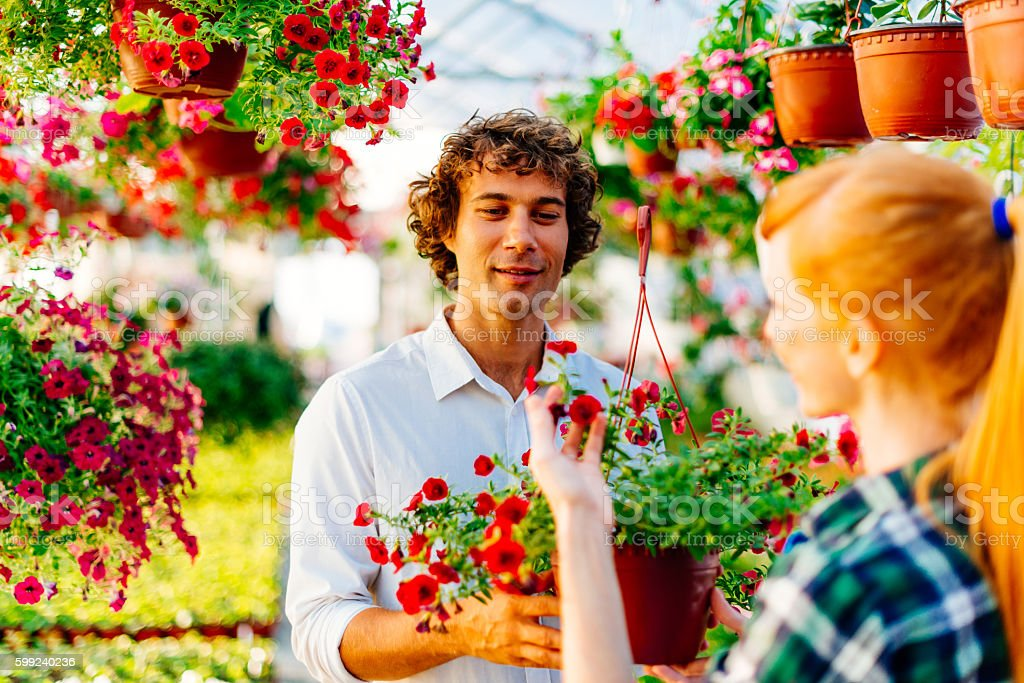 Lets buy this beautiful red daisy stock photo
