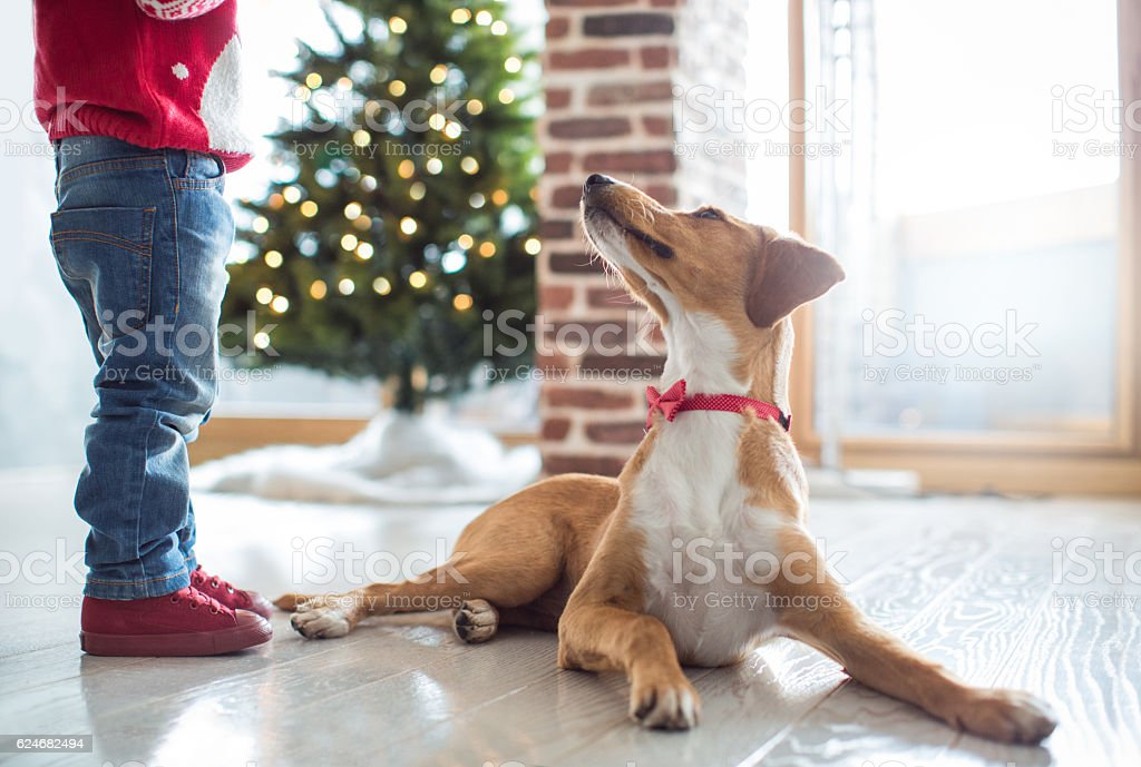 Let's find presents stock photo