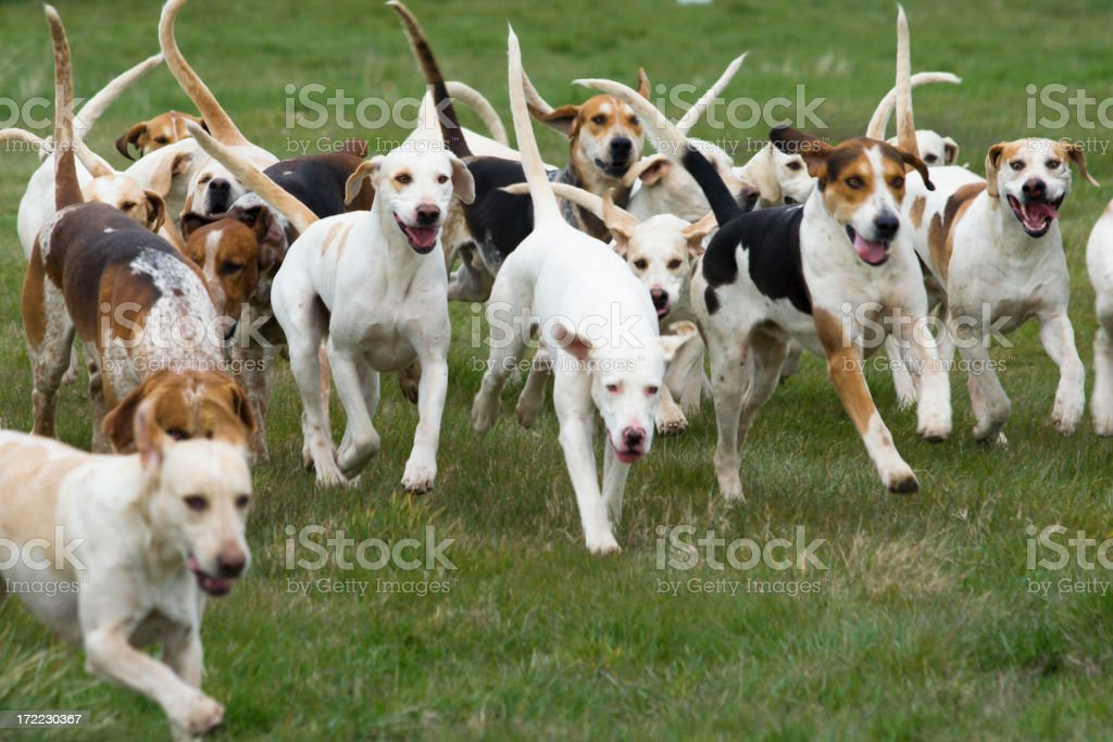 lets go! royalty-free stock photo