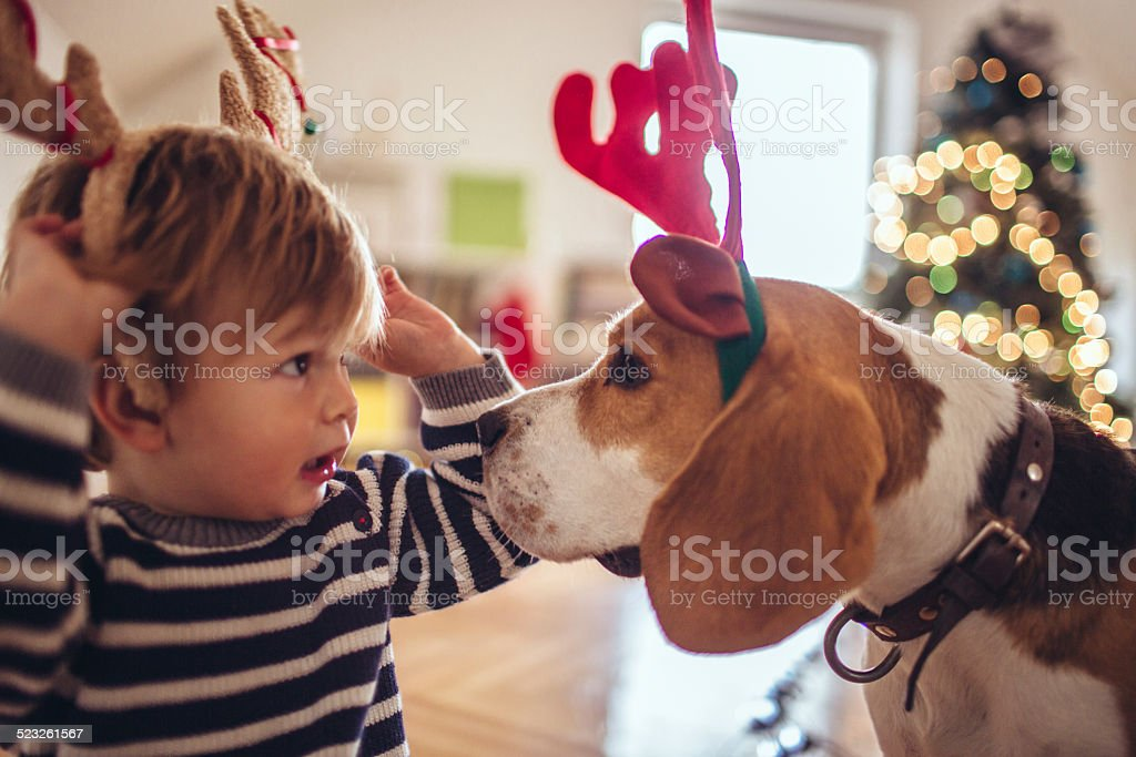 Cute little dog and cute little boy, dressed up as Rudolph, the...