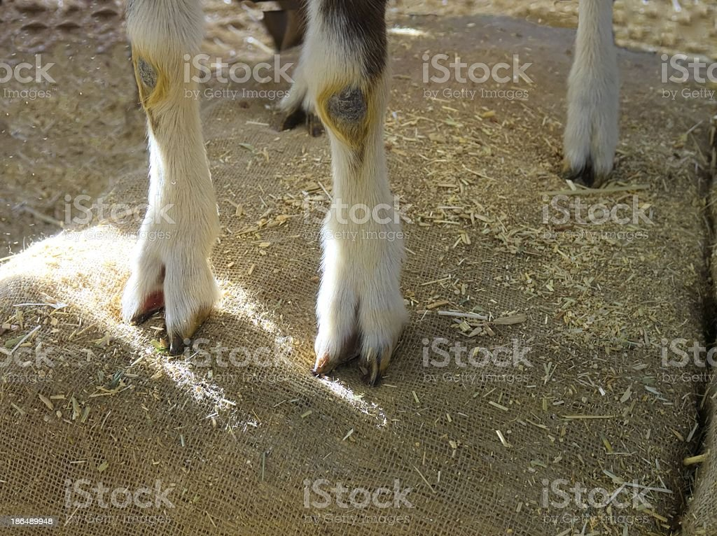 Let's not split hooves over this stock photo