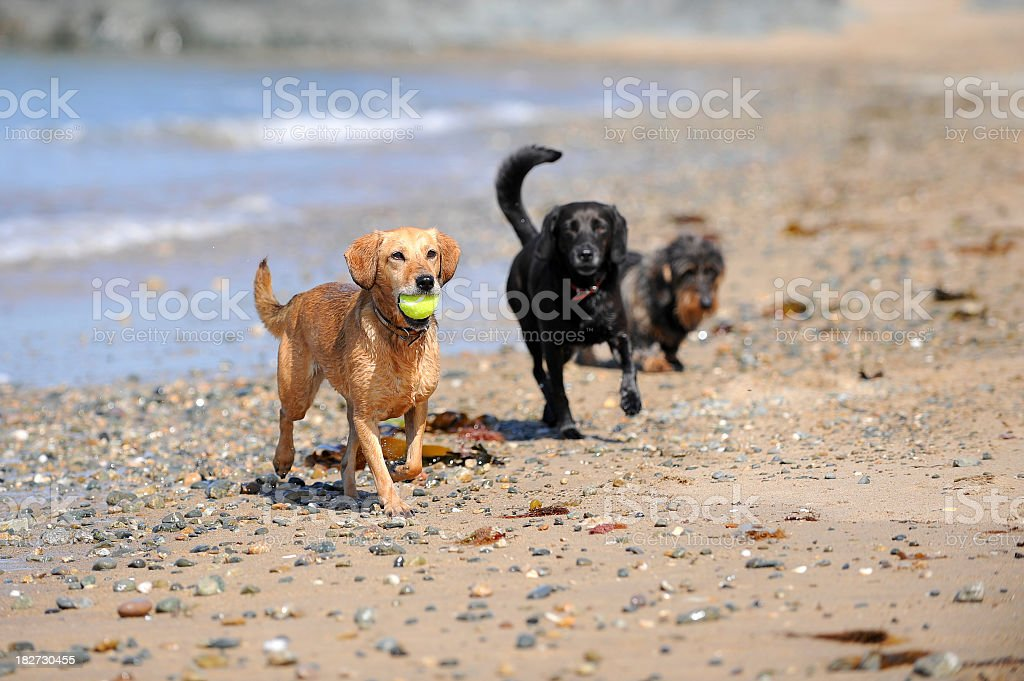 lets play ball royalty-free stock photo