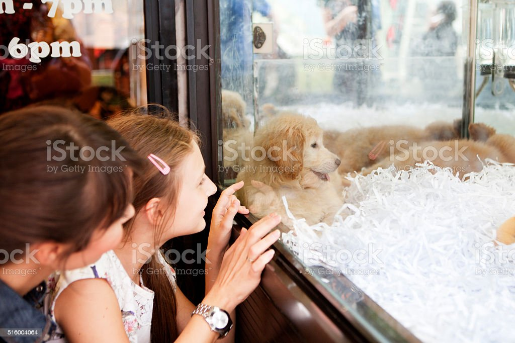 Let's take this puppy stock photo