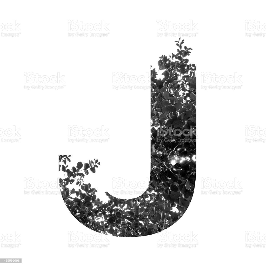 J letter double exposure with black and white leaves stock photo