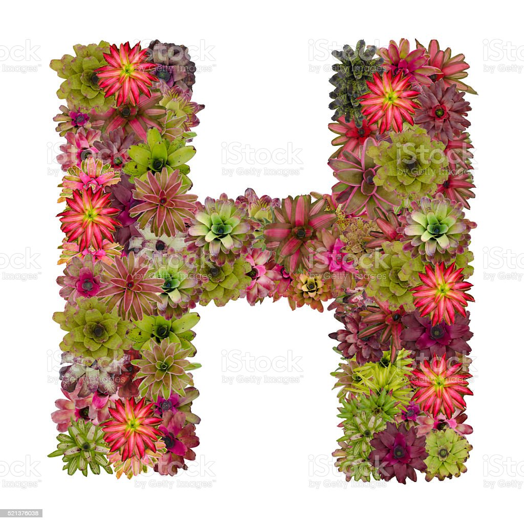 letter H made from bromeliad flowers stock photo