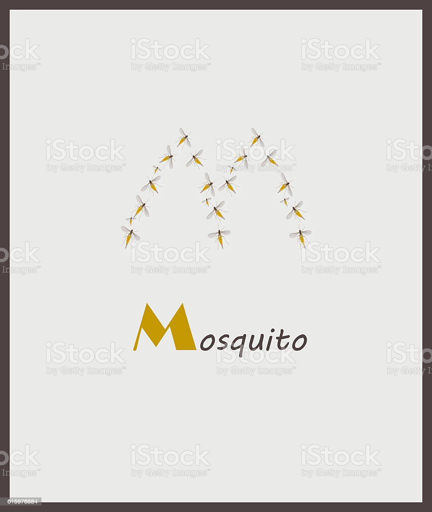 Letter M for word, Mosquito stock photo
