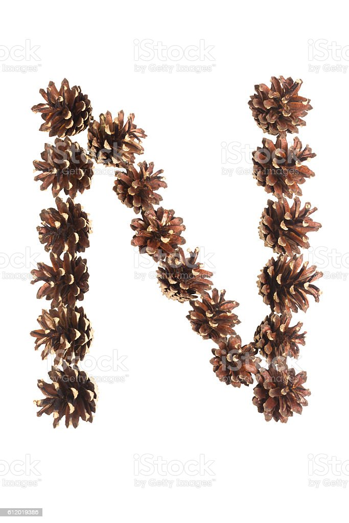 N letter made of pine cone stock photo