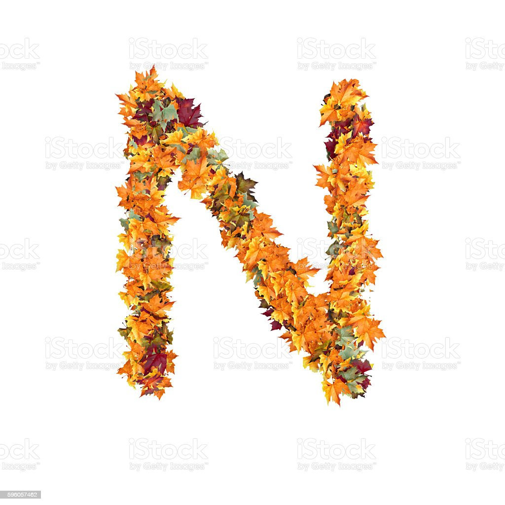 Letter N of Leaf on White Background stock photo