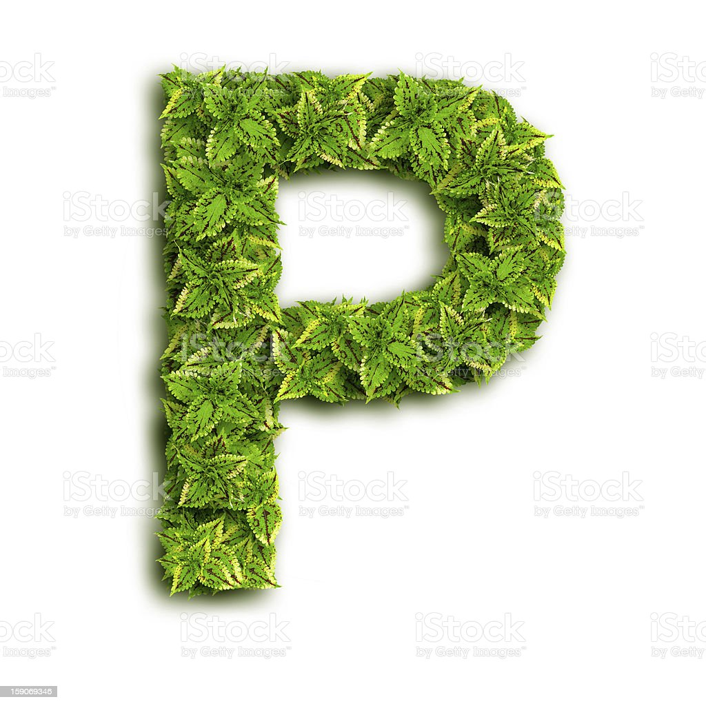 Letter P With Leaves royalty-free stock photo