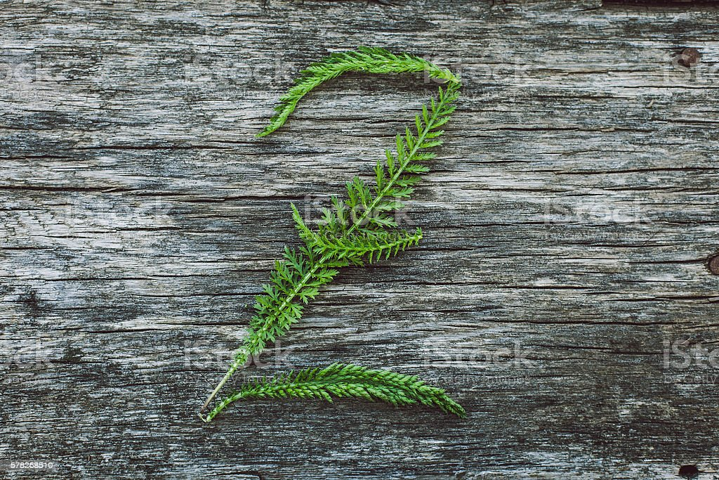Letter Z from leaves on  wooden surface, the English alphabet stock photo
