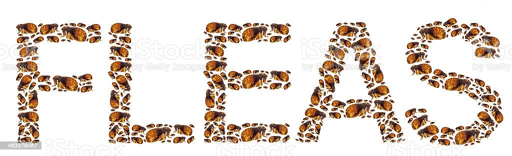 FLEAS Lettering stock photo