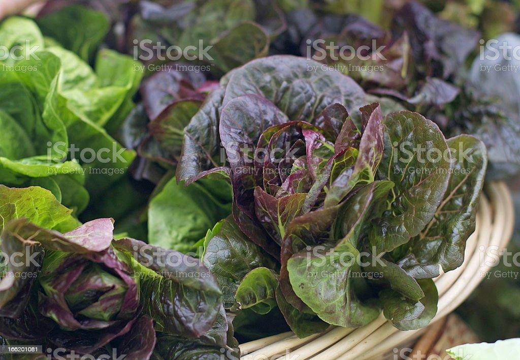 Lettuce at the farmer's market stock photo
