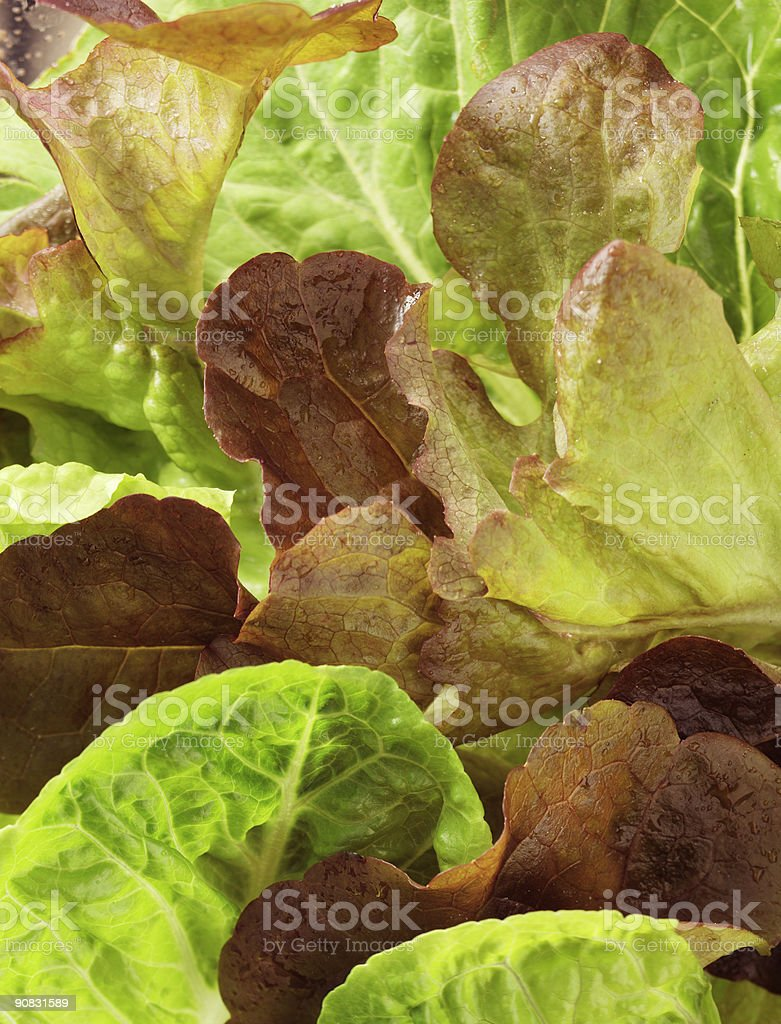 Lettuce close-up#6 royalty-free stock photo