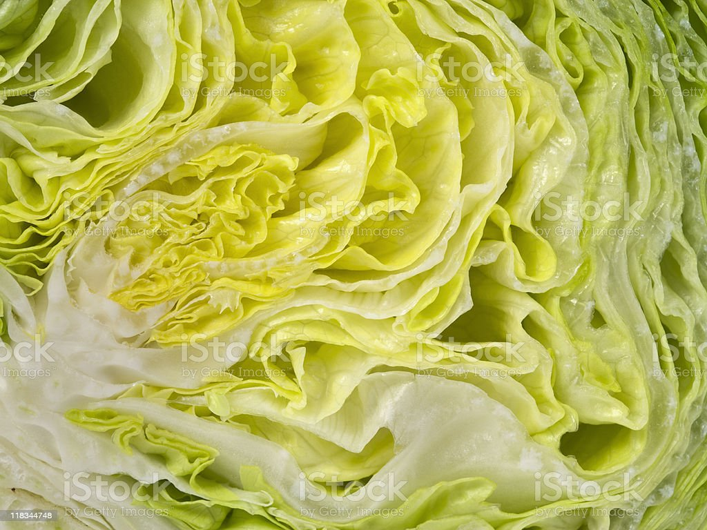 lettuce cross-section stock photo