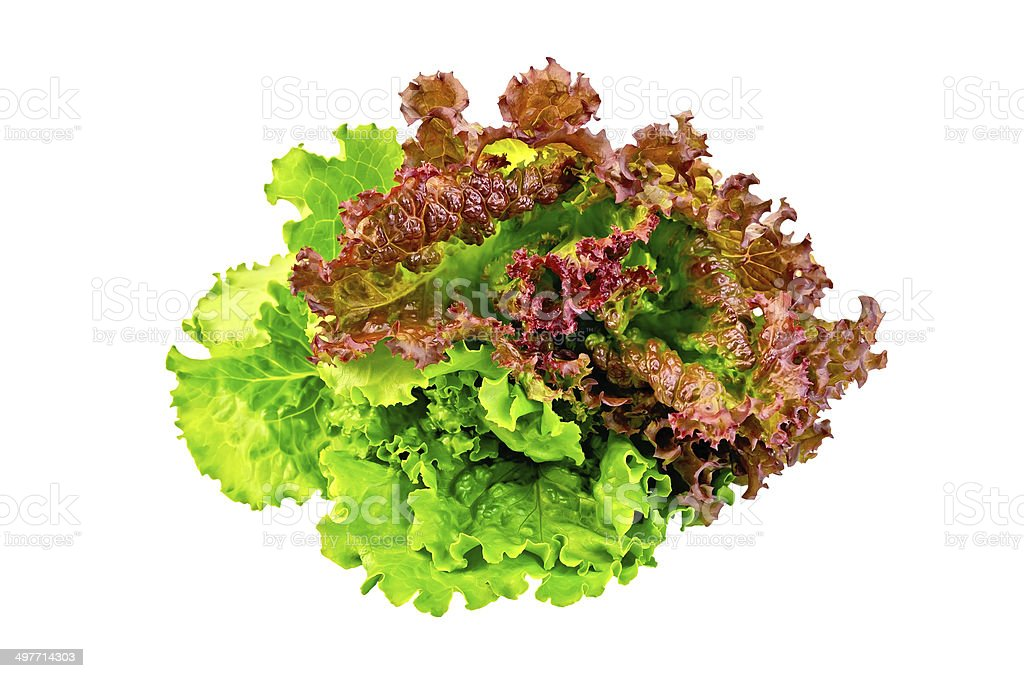 Lettuce green and red royalty-free stock photo