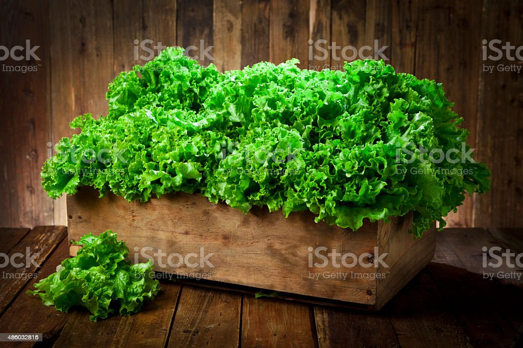Lettuce in a crate on rustic wood table stock photo