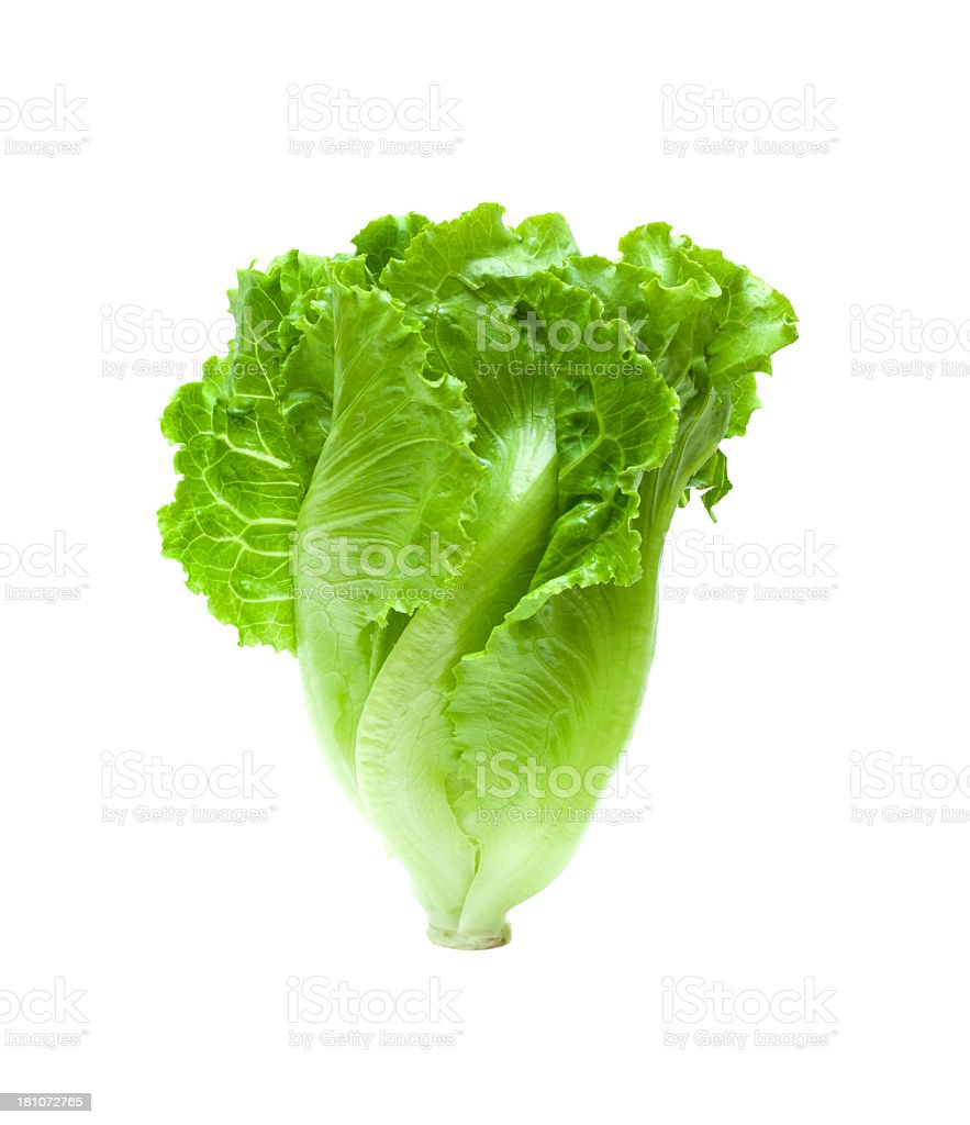Lettuce isolated isolated on white background stock photo
