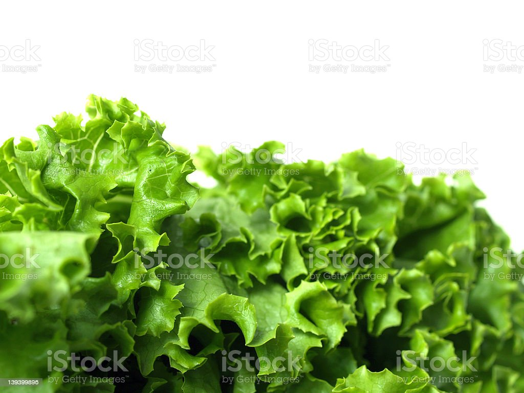 Lettuce Leaf tops royalty-free stock photo