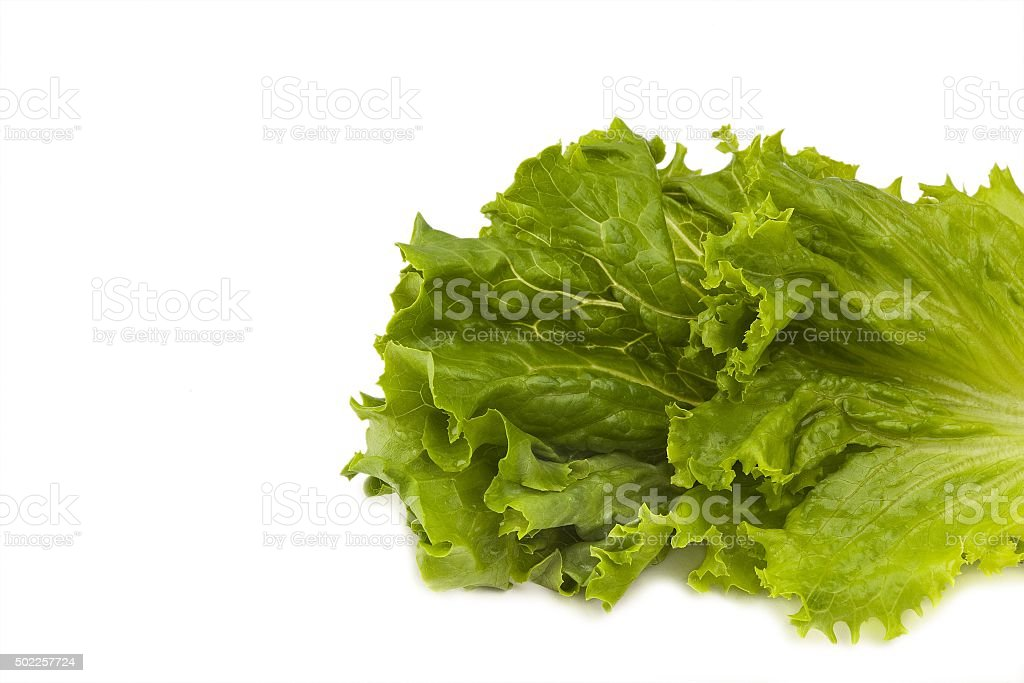 lettuce leaves coming from right side stock photo