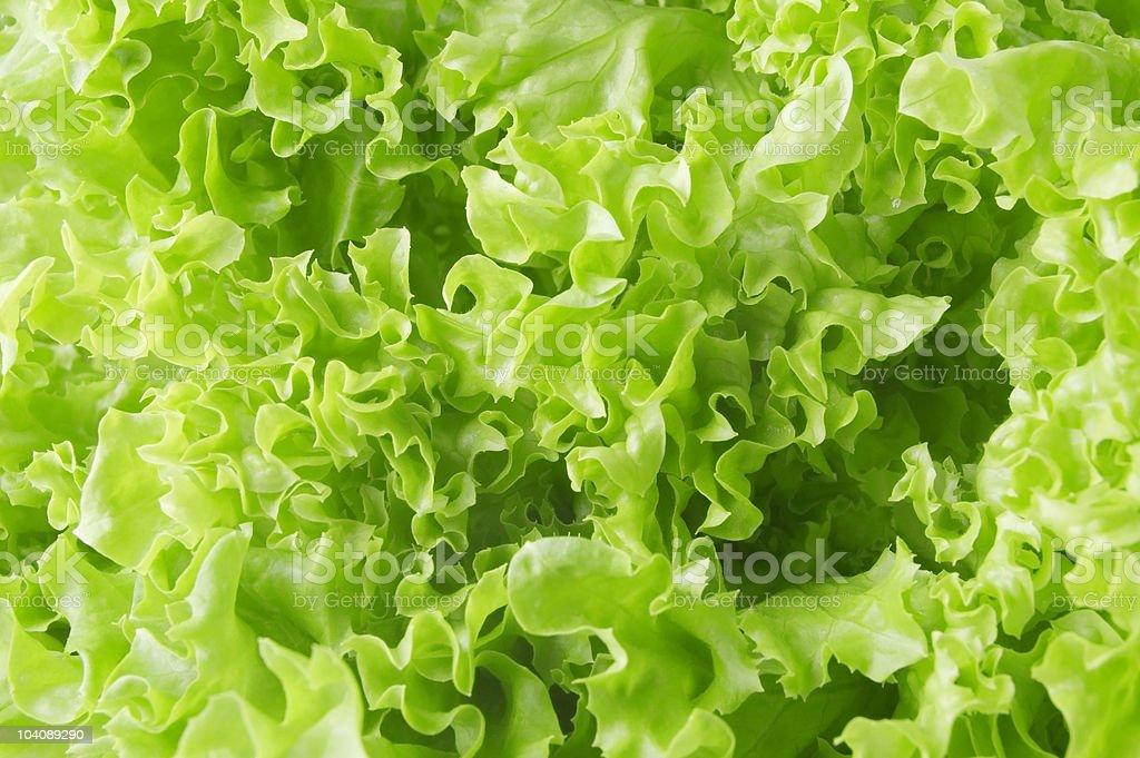 lettuce stock photo