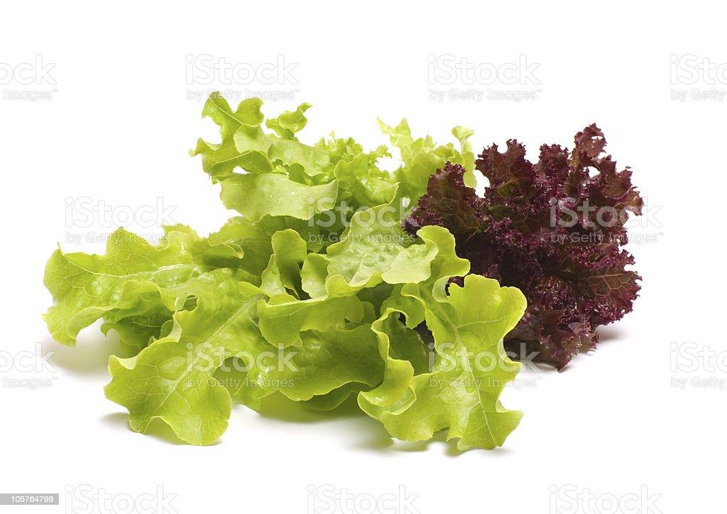 Lettuce. stock photo