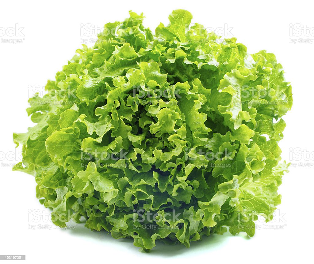 Lettuce Salad Isolated On White stock photo