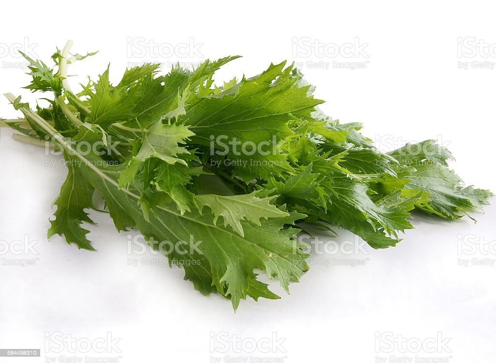 lettuce vegetable called Mizuna stock photo