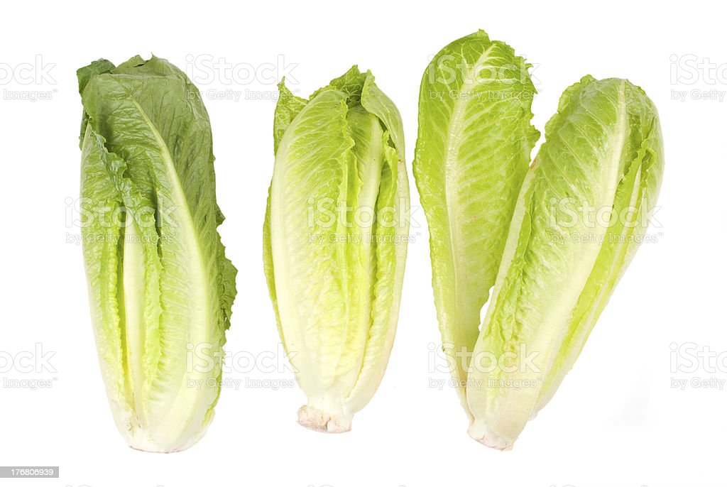 Lettuce vegetable on white background stock photo