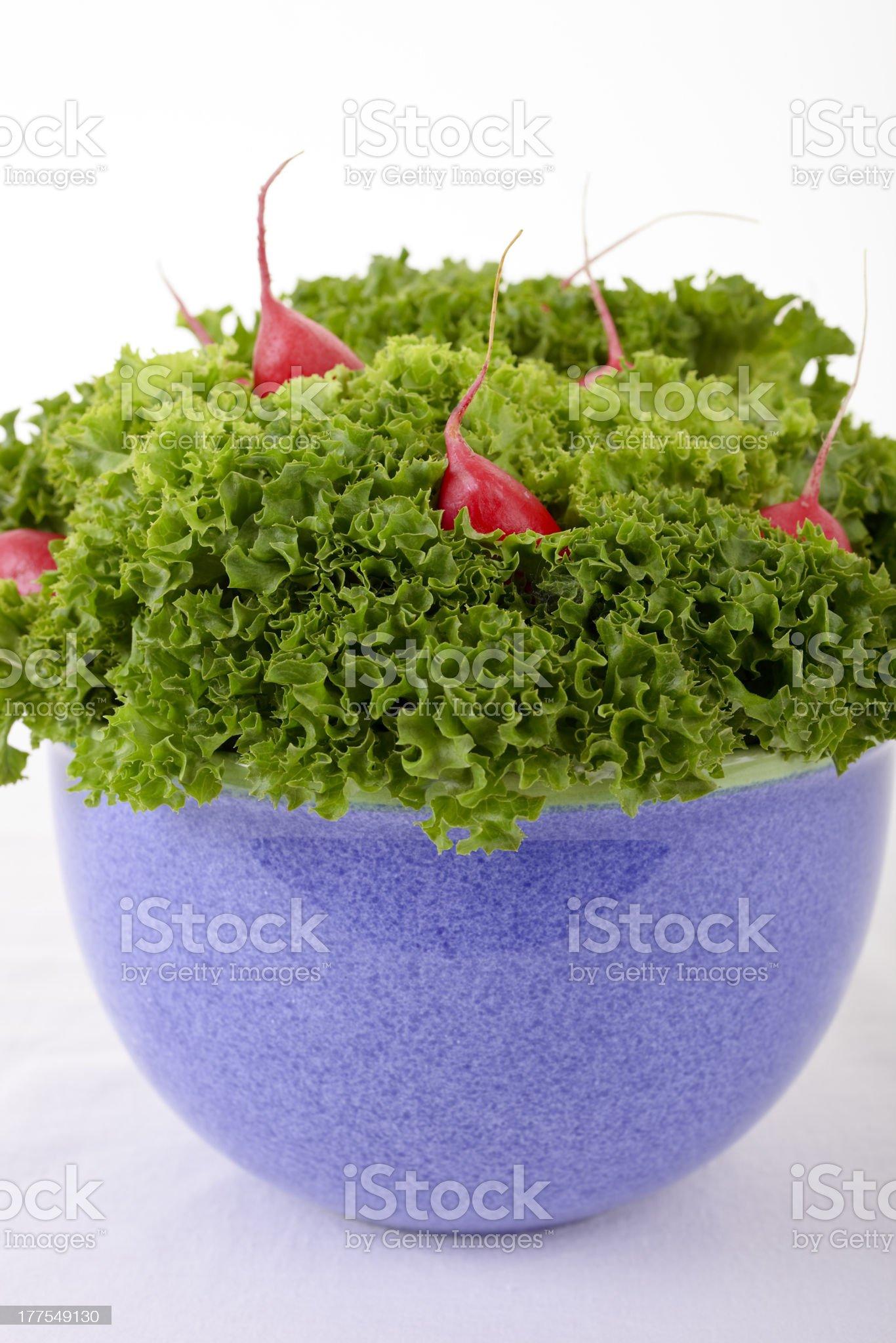 lettuce with radish royalty-free stock photo