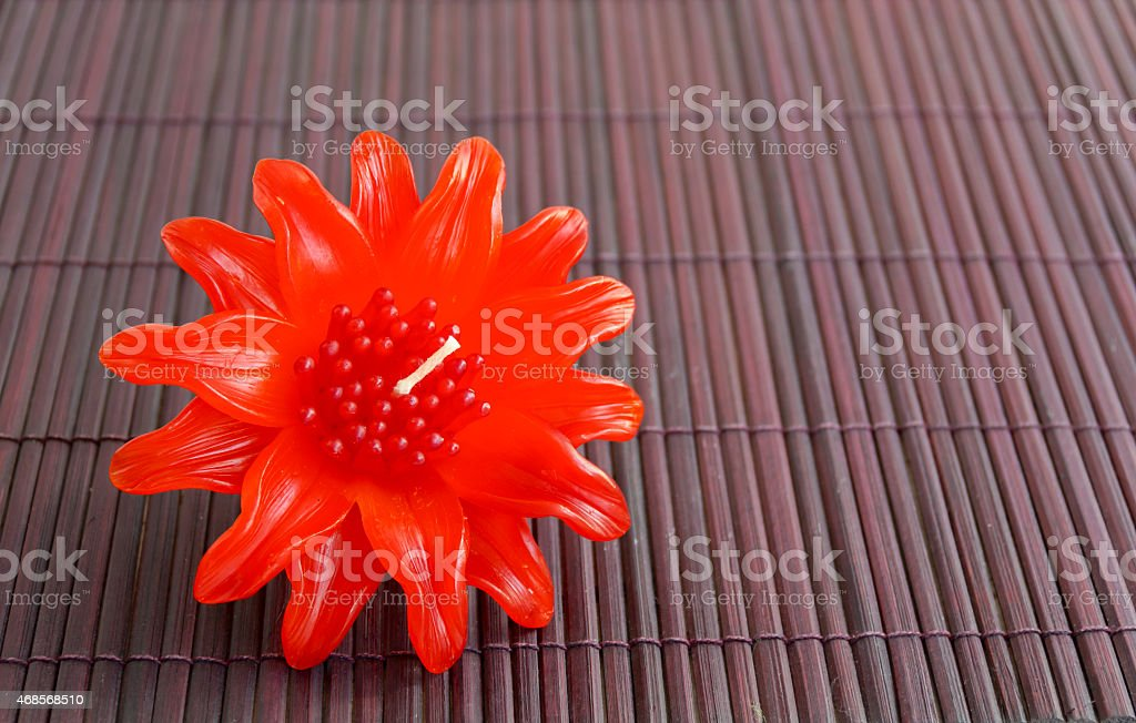 Leucadendron candle flower on wood background royalty-free stock photo