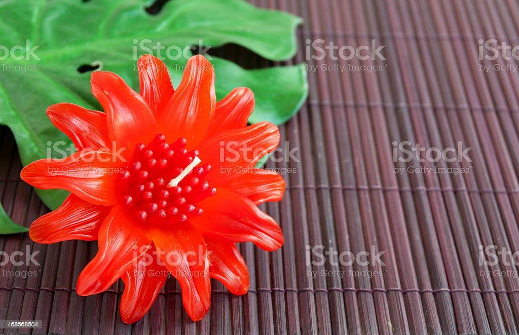 Leucadendron candle flower royalty-free stock photo