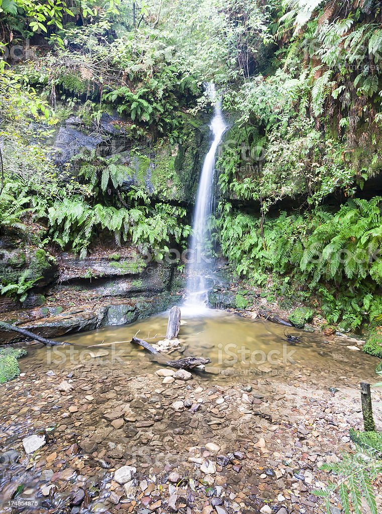 Leura Forest royalty-free stock photo