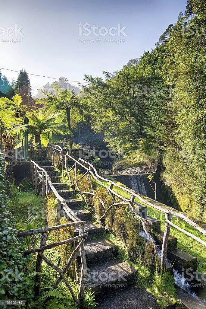 Levada, Madeira. stock photo