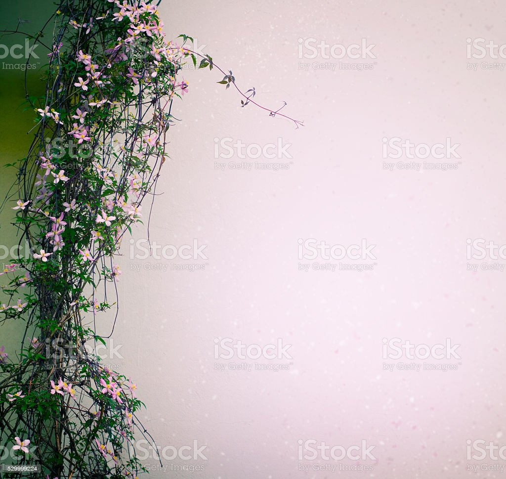 Liana with pink flowers stock photo