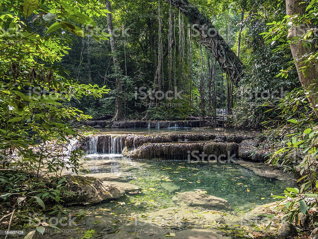 Lianas in the rainforest. royalty-free stock photo