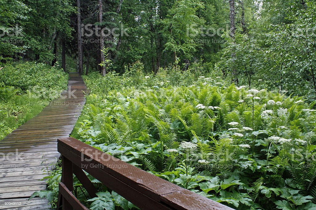 Liard Hot Springs Beta Pool boreal forest walkway royalty-free stock photo