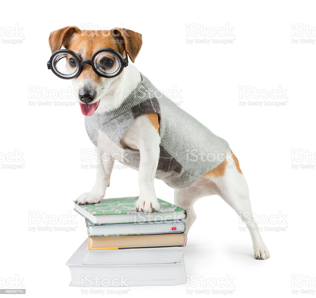 librarian Dog stock photo